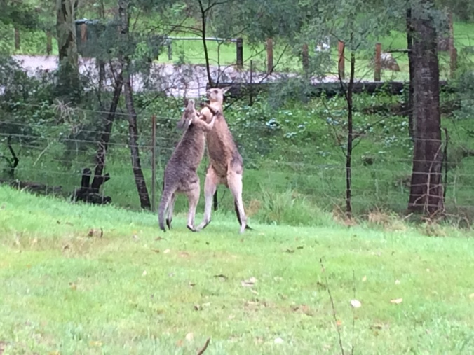 """The biggest """"wow"""" moment: roo boxing!"""